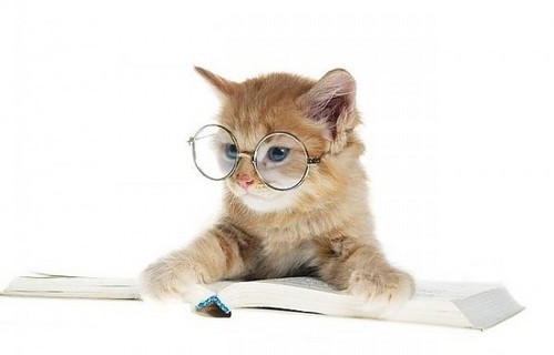 studycat.jpg